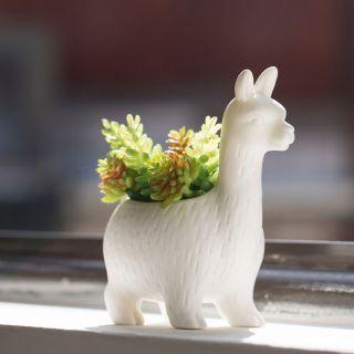 pot de fleurs lloyd le lama kikker...
