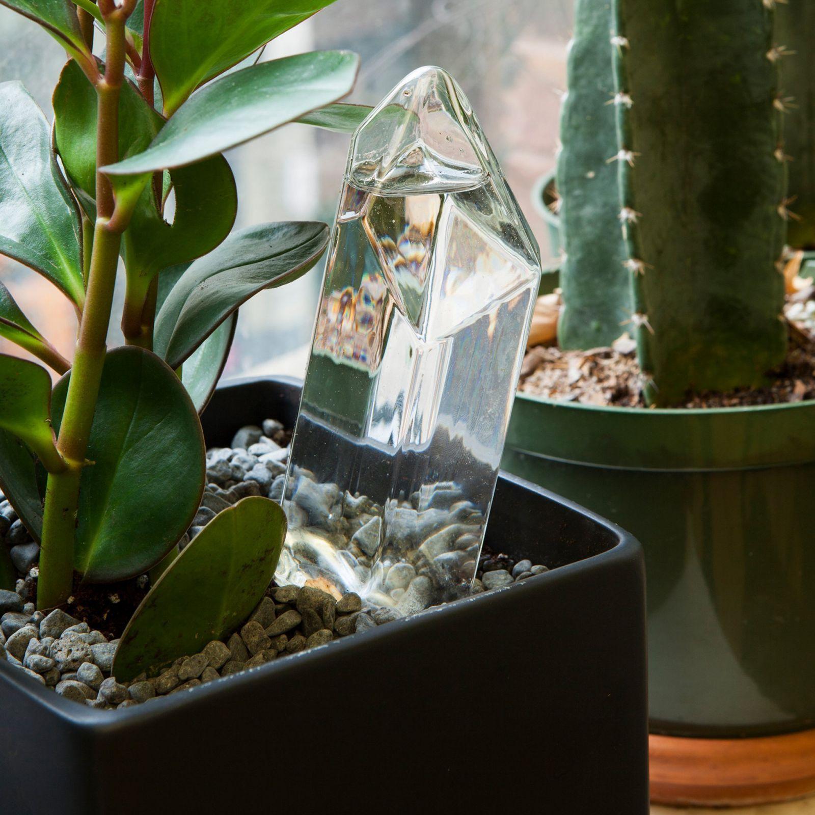 cristal d'eau pour plantes kikkerland